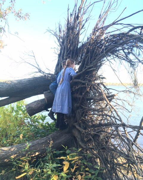 Giant Tree Root Window